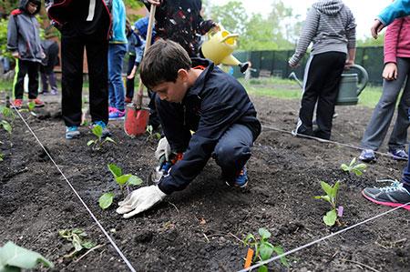 Middle School - Child Gardening