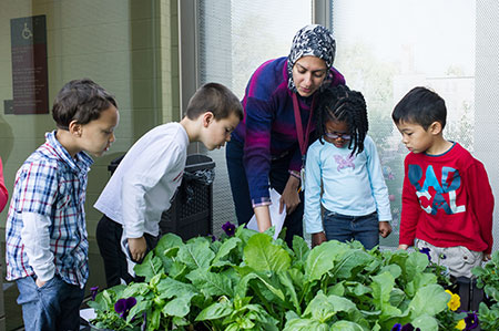 Primary School - Young Students looking at plantlife